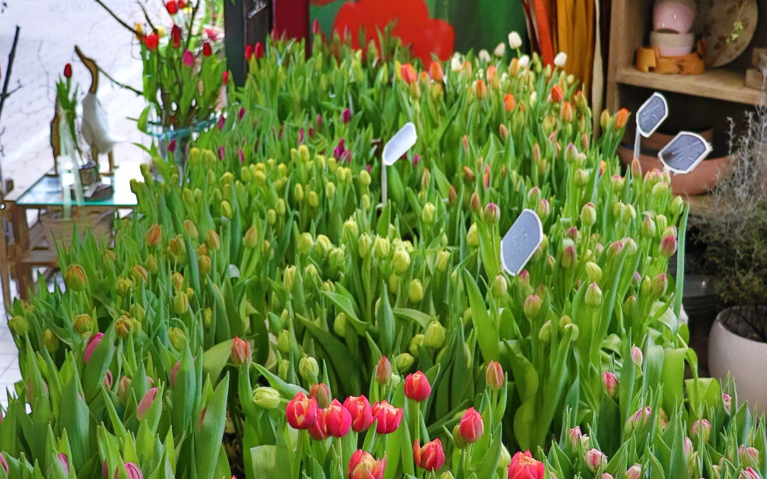 Tulpen Saison läuft super, jetzt überzeugen!